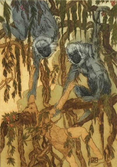 le livre de la jungle editions magellan et cie