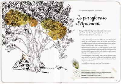mon arboretum editions magellan et cie 4